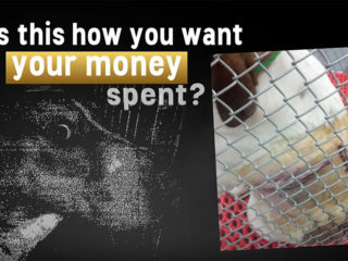 VA Dog Abuse: Is This How You Want Your Money Spent?